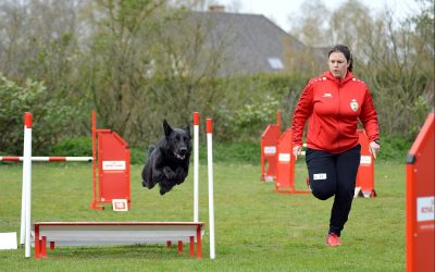 Foto's PK Agility 6 april te Geel